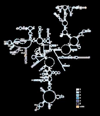 rRNA 2